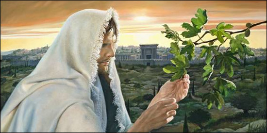 jesus-curses-fig-tree   FIG TREE 3