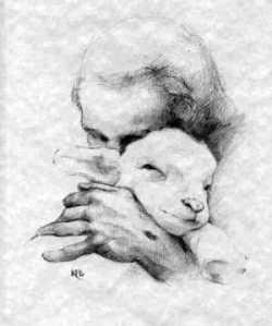 sheep 7