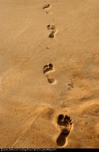 JOSHUA FOOTSTEPS